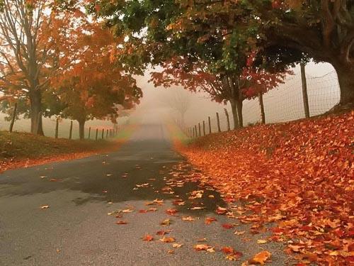 Leonardo Dalessandri | 'An Autumn's Tale'