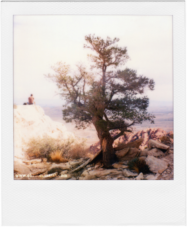 Elizabeth Sarah - 'The Giving Tree'