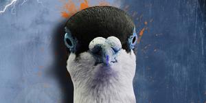 Fransisco Pez | 'Pigeonnisation'